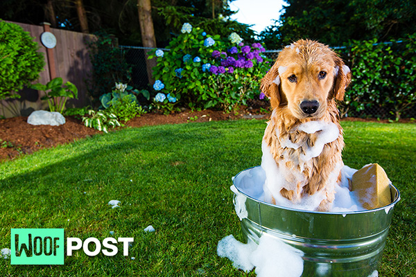 June 22 HELP! WHAT TO DO WHEN YOUR DOG GETS SPRAYED BY A SKUNK