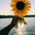 CNT Photo of the Day September 25, 2021 Make it a Sunflower Saturday!