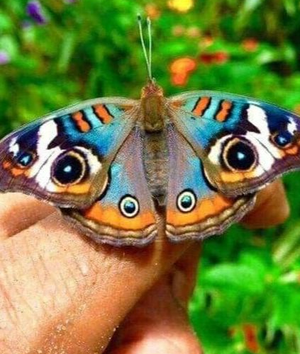 CNT Photo of the Day September 6, 2021 Butterfly Eyes!