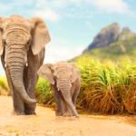 NATIONAL ELEPHANT APPRECIATION DAY – September 22