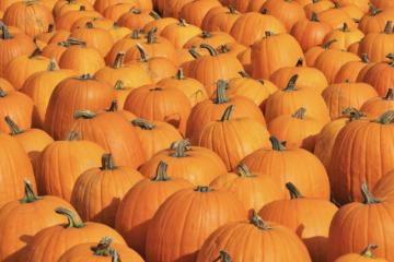 2021 Has Been a Perfect Storm for a Pumpkin Shortage