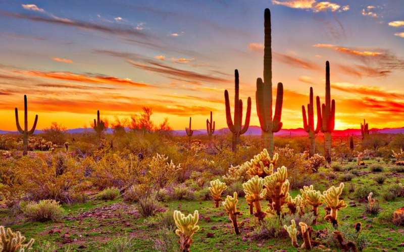 CNT Photo of the Day October 10, 2021 Paint the Desert
